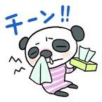 犬 猫 副鼻腔炎.jpg